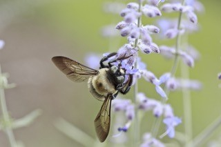 Kallal Medical Group - Allergy Testing, Bee Allergies Keller Texas