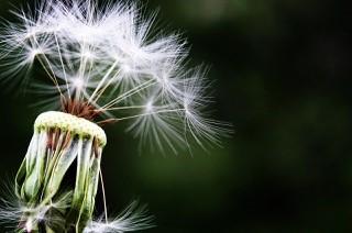 Kallal Medical Group - Allergy Testing, Pollen Allergies Keller Texas
